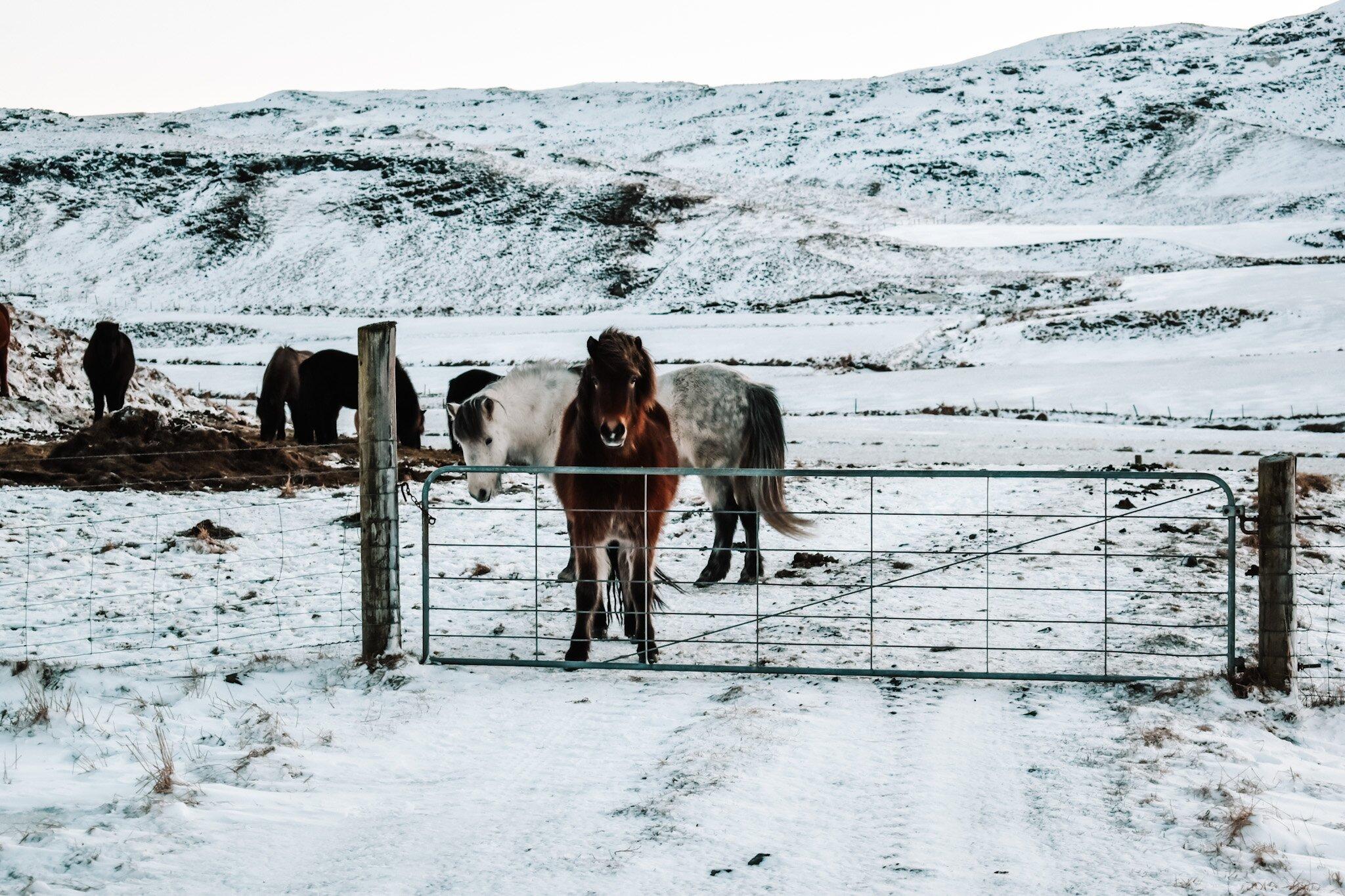 5 dni w Krainie Ognia i Lodu, czyli zimowa podróż na Islandię. Lista miejsc + mapa