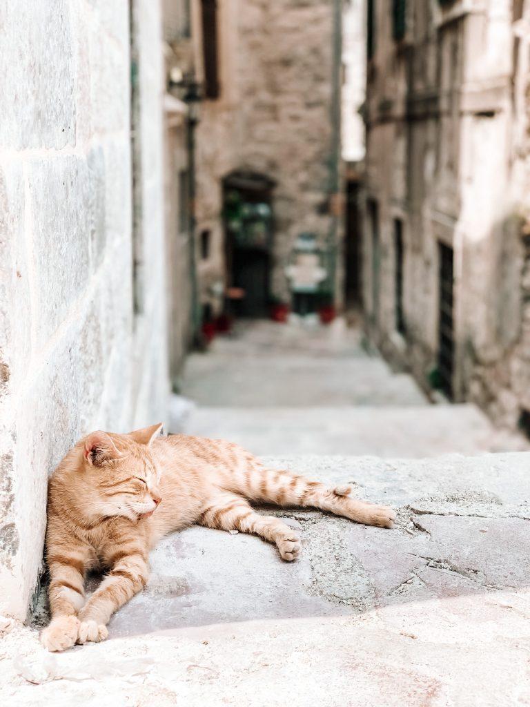 Mieszkaniec Kotoru