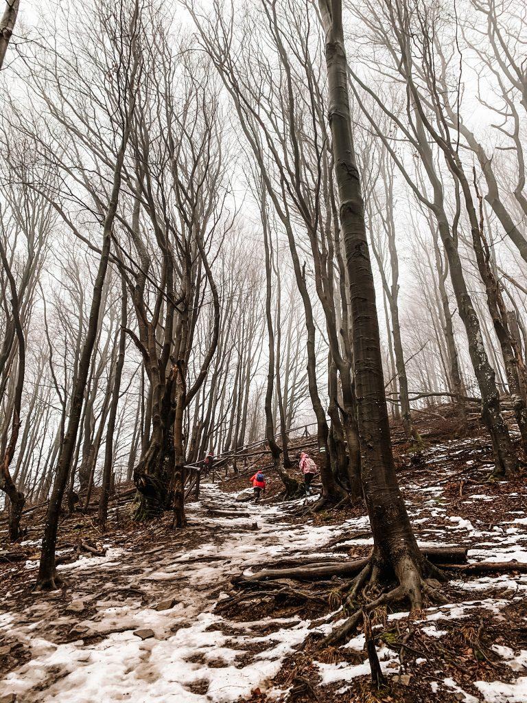 Odcinek biegnący przez las