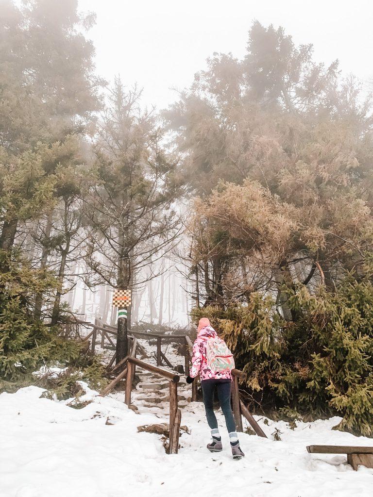 Środkowy odcinek biegnący przez las