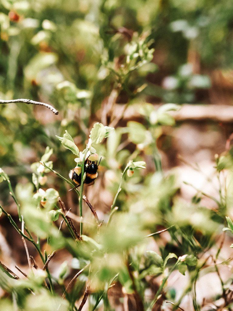 Tutejsza fauna i flora