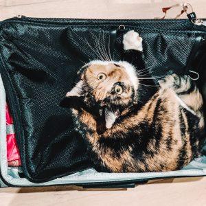 Wymiary bagażów w wybranych liniach lotniczych